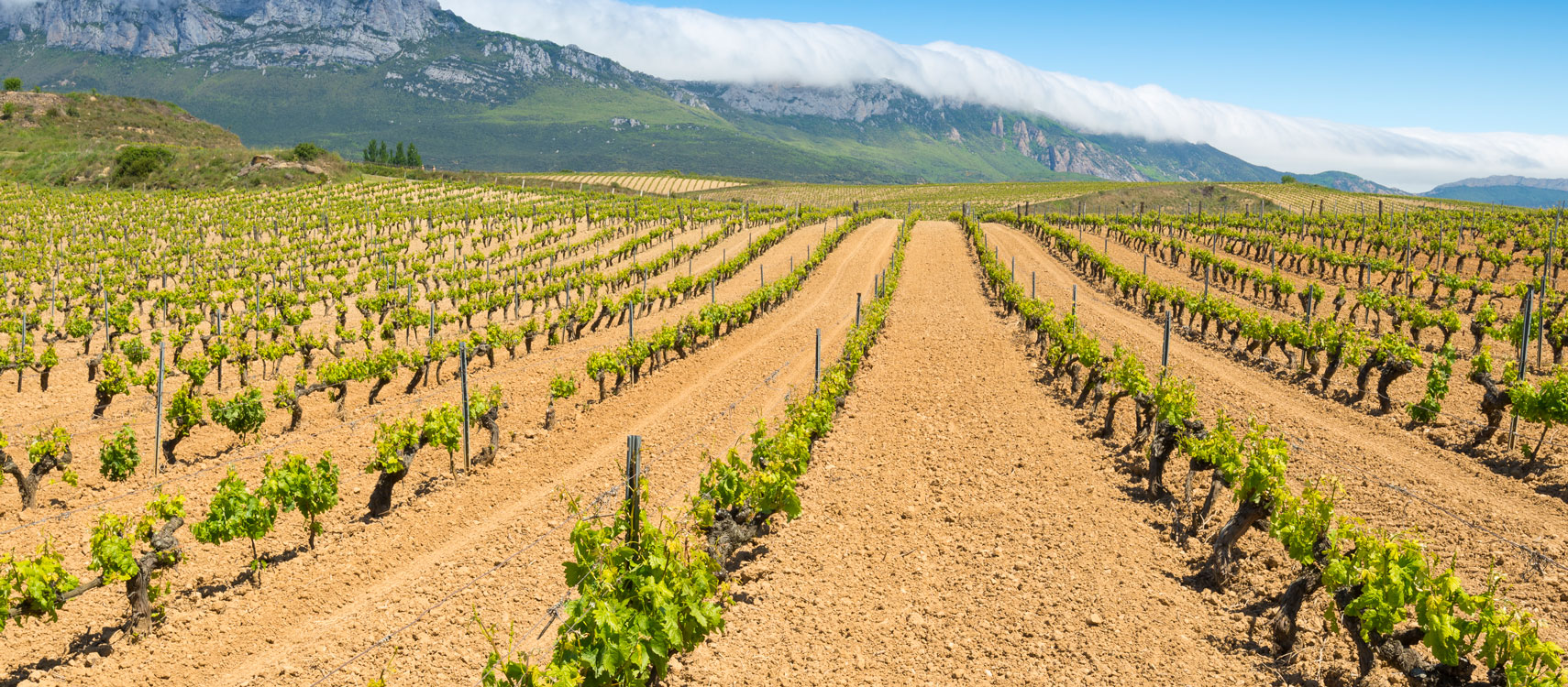 Spaanse Wijnen - Bossche Wijnkoperij