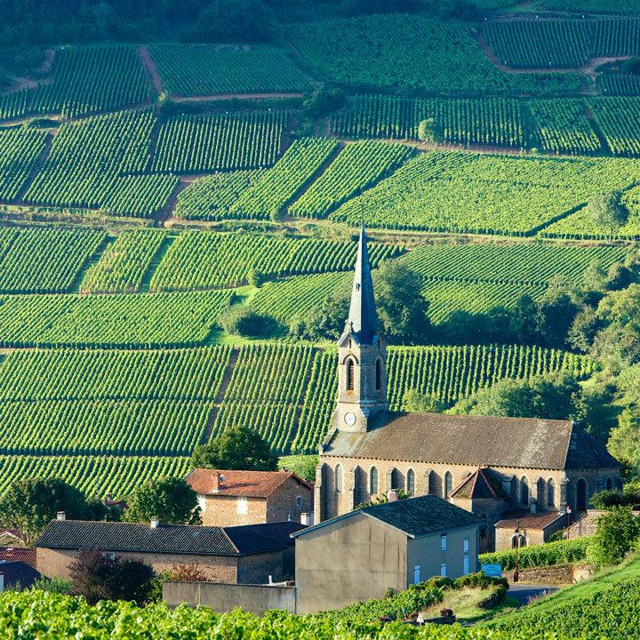 Franse Wijnen - Bossche Wijnkoperij