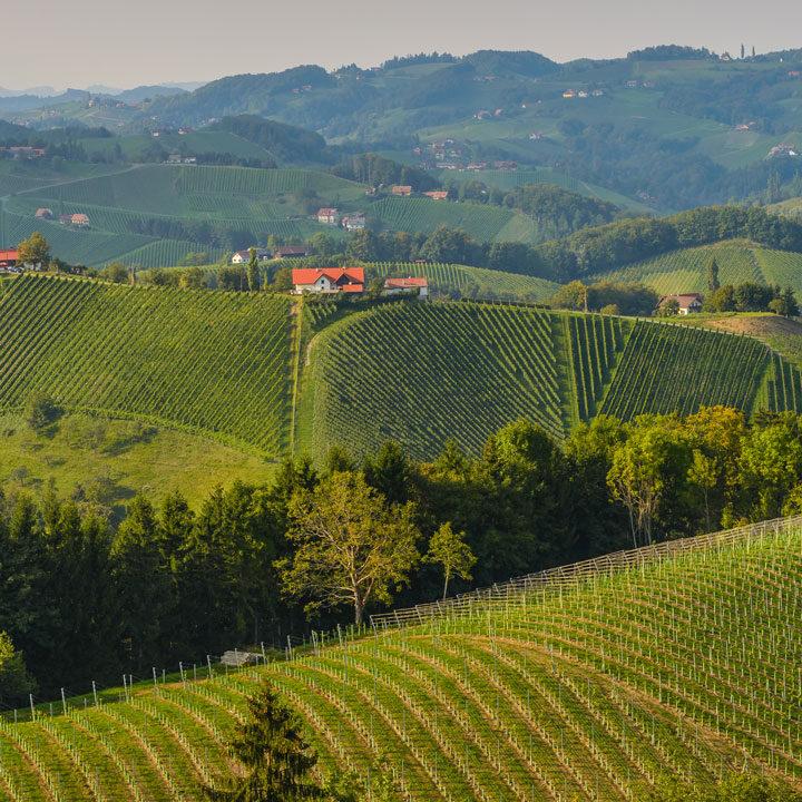 Oostenrijkse wijnen - Bossche Wijnkoperij