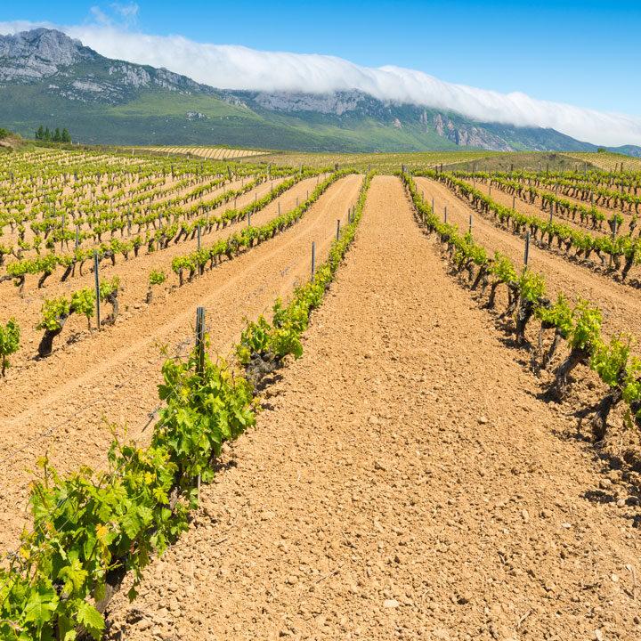 Spaanse-wijnen-Bossche-Wijnkoperij-overzicht